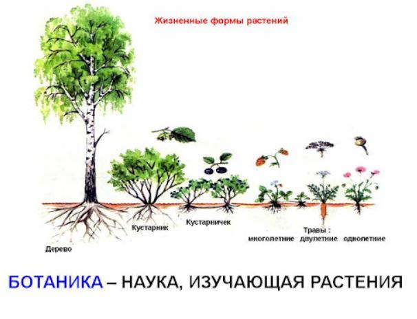 Ботаника - раздел биологии